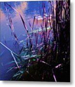 Pond Reeds At Sunset Metal Print