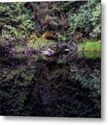 Pond Reflections -- Tongass National Forest Alaska Metal Print