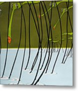 Pond Skaters Metal Print