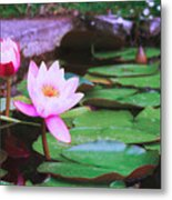 Pond With Water Lilly Flowers Metal Print