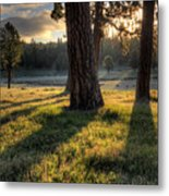 Ponderosa Pine Meadow Metal Print