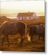 Ponies Grazing In A Field, Connemara Metal Print