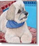 Poolside Puppy Metal Print