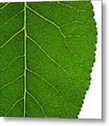 Poplar Leaf A Key To Biofuels Metal Print