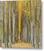 Poplar Tree Farm In Boardman Oregon In Fall Closeup Metal Print