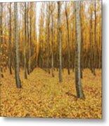 Poplar Tree Farm In Oregon Metal Print