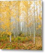 Poplar Tree Grove In Fall Metal Print