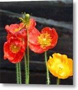 Poppies 17-01 Metal Print