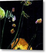 Poppies 2 Metal Print by Dana Patterson