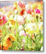 Poppies 3 Metal Print
