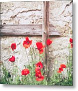Poppies Against Wall Metal Print