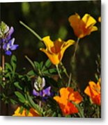 Poppies And Bluebells Metal Print