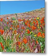 Poppies And Fiddleneck In Antelope Valley Ca Poppy Reserve Metal Print