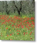 Poppies And Olives Metal Print