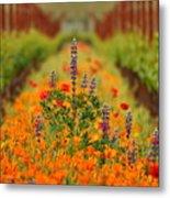 Poppies And Wildflowers In Vineyard Metal Print