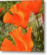 Poppies Antelope Valley Metal Print