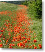 Poppies Awash Metal Print
