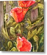 Poppies By The Fence Metal Print
