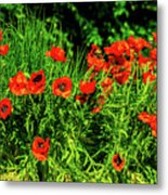 Poppies Flowerbed Metal Print