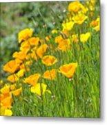 Poppies Hillside Meadow Landscape 19 Poppy Flowers Art Prints Baslee Troutman Metal Print