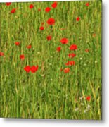 Poppies In A Wheat Field Metal Print