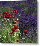 Poppies In Lavender Metal Print