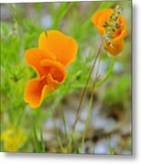 Poppies In The Wind Metal Print