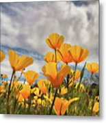 Poppies In The Wind Part Two  Metal Print