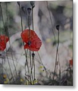 Poppies In Tuscany Metal Print