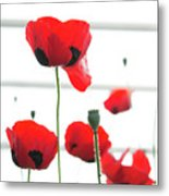 Poppies, Lovely Poppies Metal Print
