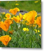 Poppies Meadow Summer Poppy Flowers 18 Wildflowers Poppies Baslee Troutman Metal Print