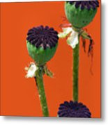 Poppies On Orange Metal Print