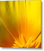 Poppies Orange Poppy Flower Close Up 2 Sunlit Poppy Baslee Troutman Metal Print