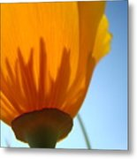 Poppies Sunlit Poppy Flower 1 Wildflower Art Prints Metal Print