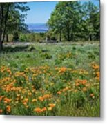 Poppies With A View At Oak Glen Metal Print