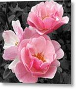 Popping Pink Roses Metal Print