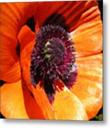 Poppy Art Metal Print