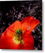 Poppy At Dusk Metal Print