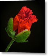 Poppy Bud Metal Print by Toni Chanelle Paisley