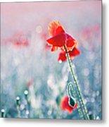 Poppy Field In Flower With Morning Dew Drops Metal Print