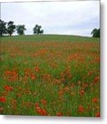 Poppy Fields In Suffolk Metal Print