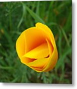 Poppy Flower Bud 9 Orange Poppies Green Meadow Art Prints Baslee Troutman Metal Print