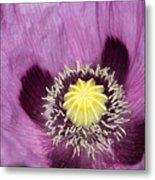 Poppy Flower Close Up Metal Print