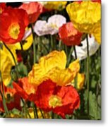 Poppy Flower Garden Metal Print