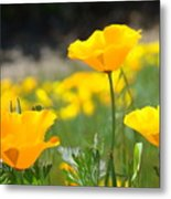 Poppy Flower Meadow 11 Poppies Art Prints Canvas Framed Metal Print