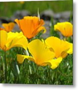 Poppy Flower Meadow 14 Poppies Orange Flowers Giclee Art Prints Baslee Troutman Metal Print