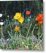 Poppy Flower Mix Metal Print