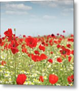 Poppy Flowers Field Nature Spring Scene Metal Print