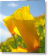 Poppy Flowers Meadow 3 Sunny Day Art Blue Sky Landscape Metal Print