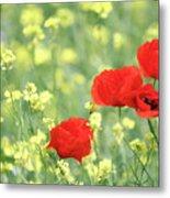 Poppy Flowers Spring Scene Metal Print